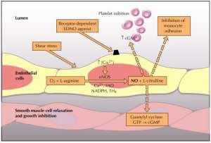 noendoschematic