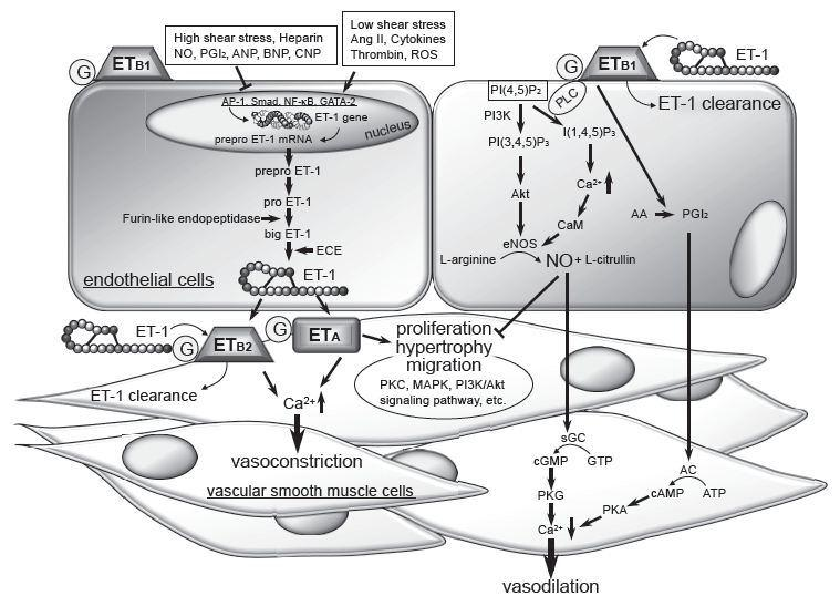 Volume One: Perspectives on Nitric Oxide in Disease Mechanisms (6/6)