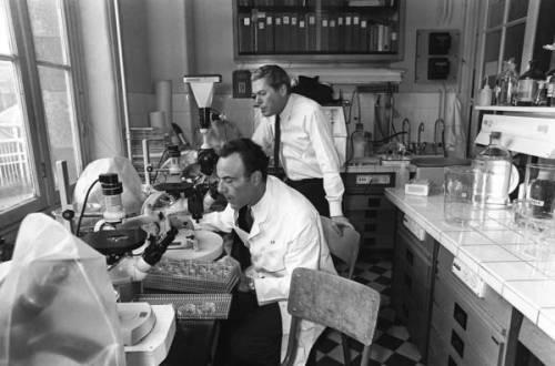 Nobel-winner Dr. Francois Jacob dies