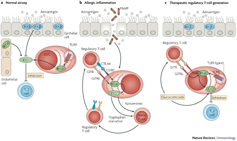 IDO and signaling gene regulation
