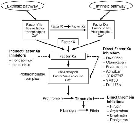 Do Novel Anticoagulants Affect the PT/INR? The Cases of XARELTO (rivaroxaban) and PRADAXA (dabigatran) (4/6)
