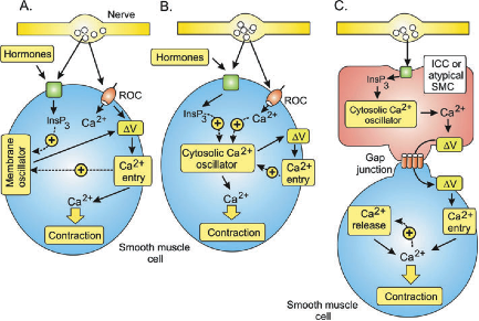 Disruption of C... G Protein Coupled Receptors Diagram