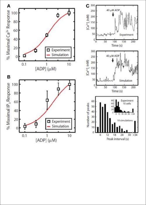 Fig 3. P2Y1 signalink model