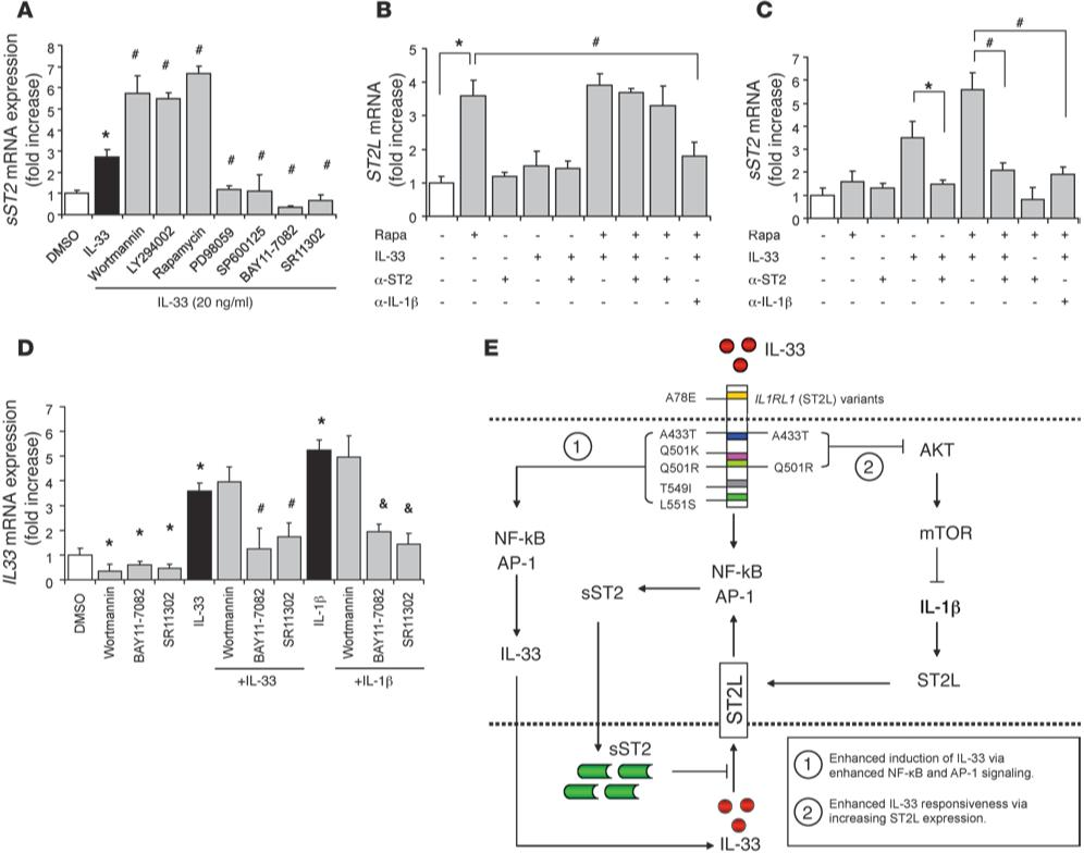 Fig 5   IL-33–induced sST2 expression is enhanced with mTOR inhibition and occurs via ST2L-dependent signaling.