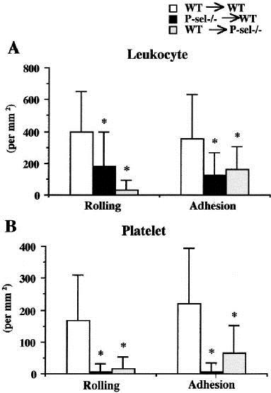 Fig  platelet and endothelial cell–associated P-selectin in mediating rolling and adhesion of leukocytes
