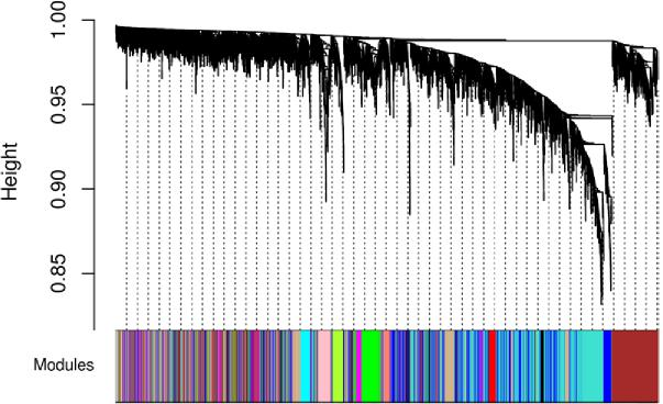 Figure 1. Network dendrogram (top) and colors of identified modules (bottom).
