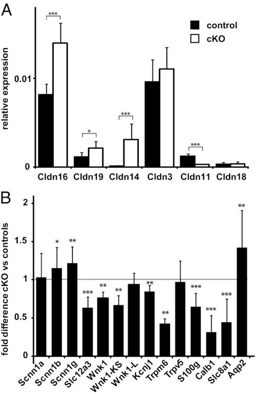 pnas.1203834109fig04  Gene expression analysis of renal claudins