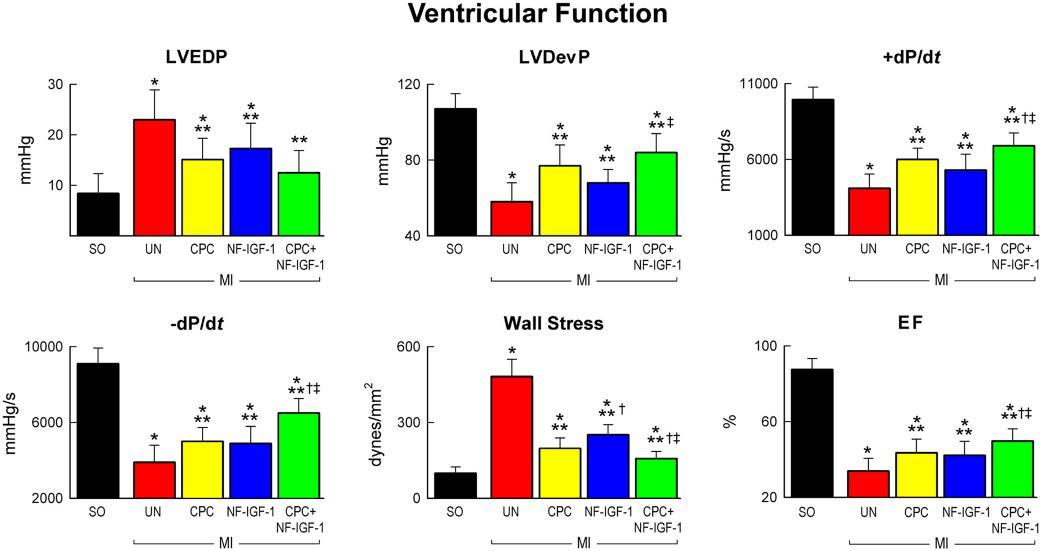 Ventricular function