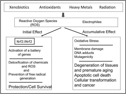 Fig 1.  Chemical and radiation exposure and coordinated induction of defensive genes.