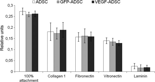 Figure 4. Data from comparative study of ADSC, GFP-ADSC and VEGF-ADSC adhesion on culture plates