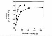 Fig. 1 EGTA extract can support NE release_page_003_edited-3
