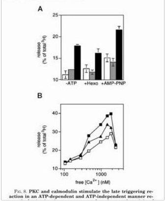 FIG. 8. PKC and calmodulin stimulate... the late triggering reaction_page_006