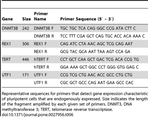 journal.pone.0027956.t006  Table 6. Primer sequences for the detection of endogenous gene expression.