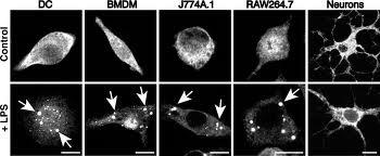 synthetic biology for regenerative medicine  image205