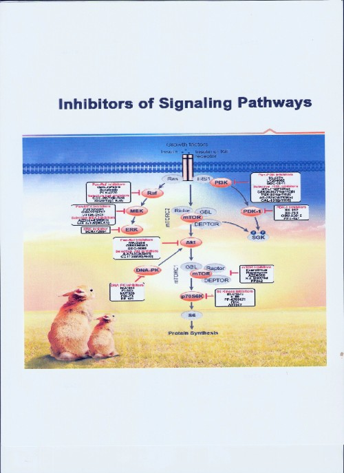 inhibitors of signaling pathways-1