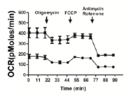 pim2-phosphorylates-pkm2-and-promotes-glycolysis-in-cancer-cells