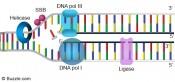 dna-replication-ligation