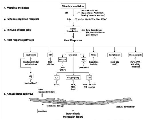 Key pathways involving NO