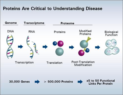 Proteins in Disease