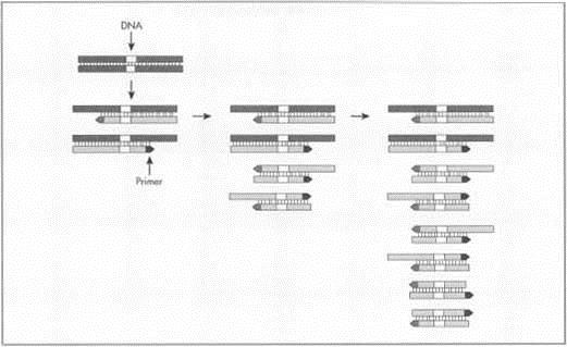 reaction paper genetics Presentation on the implications of genetics for early intervention  a brief paper  on the interaction between genetics and the environment by paul haggarty of.