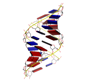 triplex DNA