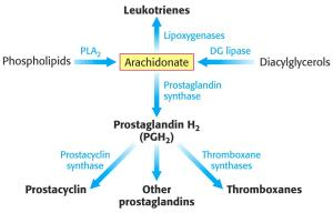 Arachidonate pathways