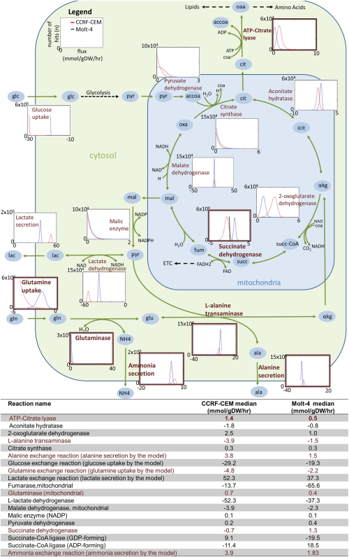 Differences in the use of the TCA cycle by the CCRF-CEM