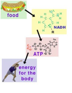 flowchart of food energy