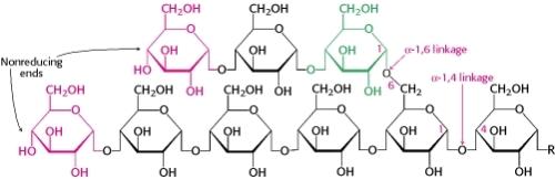 Glycogen Structure ch21f1
