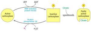 hormone regulation