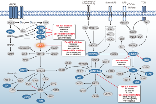 Inhibitors of MAPK Signaling Pathway