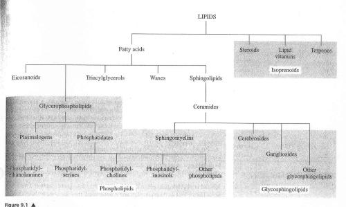 lipid types