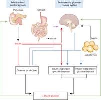 islet brain glucose signaling