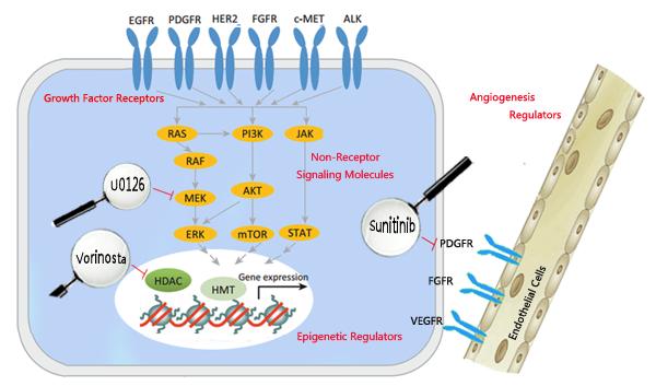 receptors-regulators