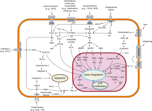 Signal_transduction_pathways.svg