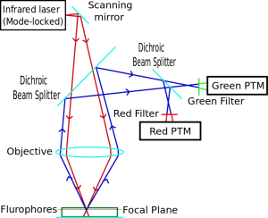 Diagram_of_a_two-photon_excitation_microscope_