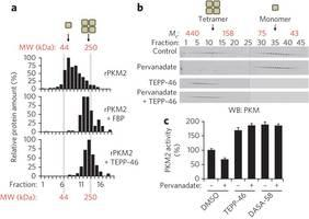 Activators promote PKM2 tetramer formation and prevent inhibition by phosphotyrosine signaling.