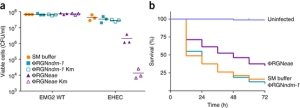 ΦRGN particles elicit sequence-specific toxicity against enterohemorrhagic E. coli in vitro and in vivo.