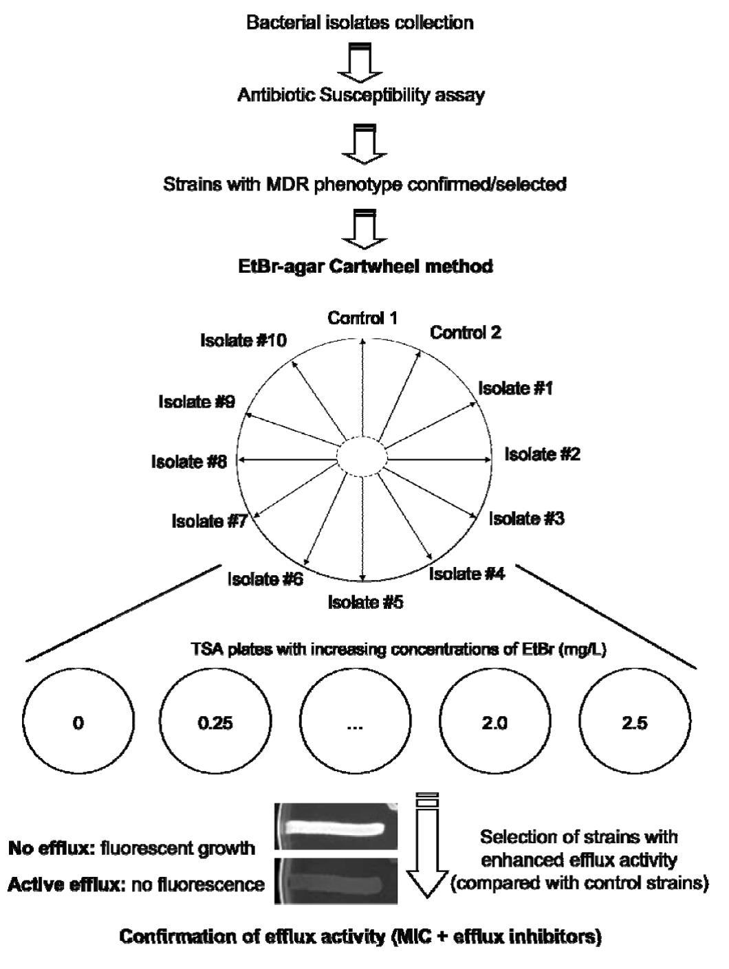 Opizionibinarie Quale E Importo Minimo   Mimevagebasoh Web