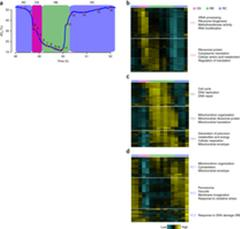 High-temporal-resolution analysis of gene expression