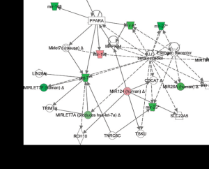 Ingenuity network analysis showing up (red) and downregulation (green) of miRNAs involved in PC and their target genes