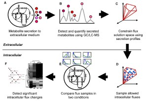 integration of exometabolomic (EM) data