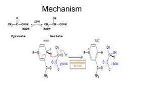 mechanism of LDH reaction