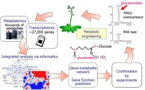 Metabolic Systems Research Team fig2