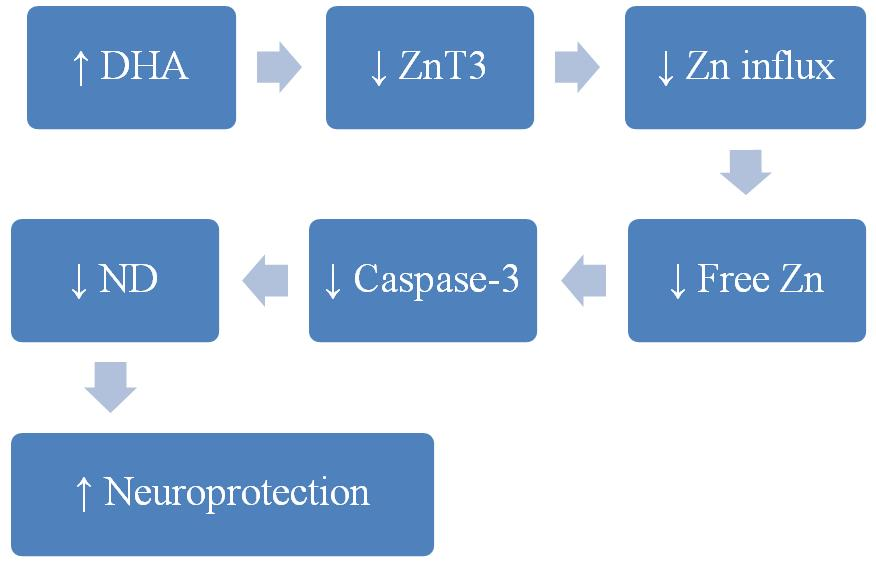 possible benefits of DHA in neuroprotection through reduction of ZnT3 transporter