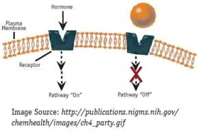 cell-membrane