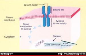 Understanding these receptors and identifying their ligands and the resulting signal transduction pathways represent a major conceptual advance.
