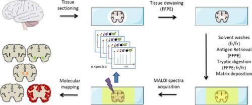 MALDI imaging workflow