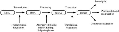 Mechanisms by which a single gene can give rise to multiple gene products