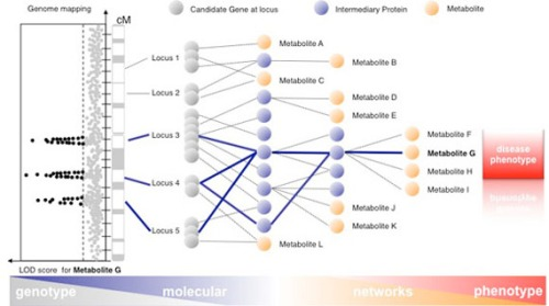 network genetics metabotypes -  integrated metabolome and interactome mapping (iMIM)